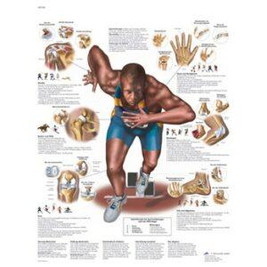 Láminas anatomía